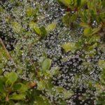 雨上がりの茂みの中に現れた小さな宇宙