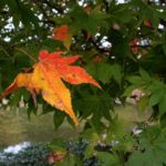 紅葉の始まり 小さい秋見つけた!