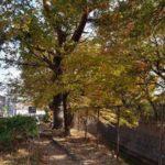 多摩川上水あたりの落ち葉がいっぱいの風景