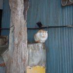 【ねこ】小屋のわきにいた眠そうなねこ。