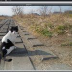パソコンにソフトが入ってなくても画像を調整できる!Photo editor online ( フォトエディターオンライン)