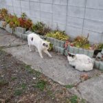【ねこ】白ねこ二匹が接近。ツーショットを撮るチャンス!