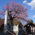 梅の咲く風景 1
