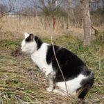 【ねこ】草むらの中にじっとしているねこを見つけました。