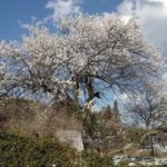 梅の咲く風景 2