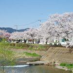 身近にある桜を撮ってみる 9