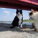 【ねこ】橋の下のツーショット。白黒くんと三毛さん