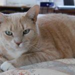「ペットの写真を撮影する4つのコツ」という記事がありました。
