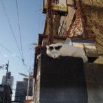 【ねこ】塀の上で退屈そうなねこ