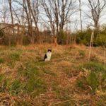 【ねこ】ノラねこのナナを夕刻の草むらに見つけました。
