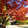 国分寺の殿ヶ谷戸庭園の紅葉は美しい。11月下旬から12月初めが見ごろです。 (紅葉の写真多数あり)