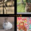 稲城市中央図書館で「クリエーターによる四人展」を開催。2016年12月20日(火)~2017年1月9日(月)展示する写真を紹介します(ねこ、風景、料理など多数あり)