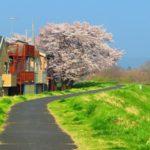 Canon PowerShot SX720 HSを「極彩色」に設定して桜を撮ったらすごい写真になった。「AUTO」で撮ったときとの比較。