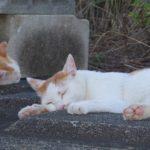 【ねこ】コンクリートを抱き枕にしてぐっすり就寝中。硬さなどまったく気にしてない様子。今週のインスタ投稿ねこ写真、まとめ。