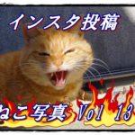 【ねこ】Instagramに投稿。ねこ写真まとめ Vol 13 突然口を大きく開ける茶トラさん。怒っているの?