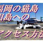 福岡の猫島「相島」へのアクセス。福工大前駅から相島渡船場へのバスの利用方法。バスを使わないルートも紹介。