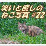 【笑い・癒し】ねこ写真まとめ Vol 22 ジロッ「人間はこっちに来るにゃ!」キジトラさんににらまれた。