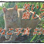 【笑い・癒し】ねこ写真まとめ Vol 26 いつも母猫の後ろにいる子猫。今日は日向ぼっこしに出てきたよ。