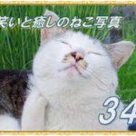 【笑い・癒し】ねこ写真まとめ Vol 34 よく見ると白、黒、茶色の三毛さん。女の子だったんだね。これは失礼しました(汗)