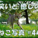 【ねこ】ねこ写真まとめ Vol 46 すみっこにいる茶トラ。ボートの陰でくつろぐねこ。大あくびするねこ。林の中の黒猫。広い公園のねこ。などなど。