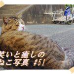 【ねこ】ねこ写真まとめ Vol 51 鉄橋をバックにキメるねこ。ストレッチするねこ。にらみ合う二匹のねこ。さりげなくニオイを嗅ぐねこ。座ったまま寝てるキジトラ。