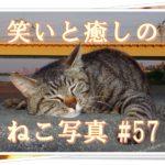 【ねこ 画像】ねこ写真まとめ Vol 57 ふらふらねこさん。下界を見下ろすキジトラさん。険しい寝顔の茶トラ。寝すぎて疲れたキジトラさん。ストレッチするクロちゃん。