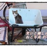 【ねこ 画像】ねこ写真まとめ Vol 60 クルマの下から出てきたキジトラ。連絡船乗り場のねこたち。夕方見かけた三毛猫。転がり始めたキジトラ。器用に水を飲む三毛猫。