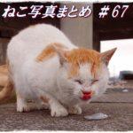 【ねこ 画像】ねこ写真まとめ Vol 67 凛々しい顔の三毛猫。「ジロッ」と見るハチワレサビ。堂々としたキジトラ。戸口元で鳴いている白猫。氷を舐めたねこ。