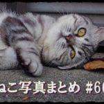【ねこ 画像】ねこ写真まとめ Vol 66 全身モコモコのねこ。目つきの悪いキジトラ。自分専用のマットがあるねこ。ごはん待ちの二匹のねこ。森の中の三毛猫。