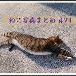 【ねこ 画像】ねこ写真まとめ Vol 71 三角おむすび不機嫌ねこ。自分のシッポ踏んでストレッチするねこ。キメ顔の二匹。公園にいたフサフサのキジトラ。