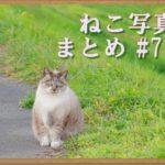 【ねこ 画像】ねこ写真まとめ Vol 78 田舎の太ったねこ。「ムクッ」と起きた三毛猫。酔っ払いのような顔のねこ。気の陰から現れた黒猫。グルーミングするキジトラ。