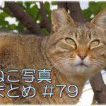 【ねこ 画像】ねこ写真まとめ Vol 79 子猫のトラちゃん。何か言いたげな三毛猫。隙間を通るねこ。道のまん中にいるねこ。日向で昼寝をしている三毛猫。片目のキジトラ。
