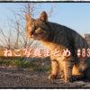 【ねこ 画像】ねこ写真まとめ Vol 83 コロナの影響で撮影に行けなくなってしまった。猫たちはどうしているのかな。無性に猫島に行きたくなった。