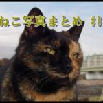 【ねこ 画像】ねこ写真まとめ Vol 82 のんびり散歩する三毛猫。「ムッ」とした顔の茶トラ。金網の向こうので様子をうかがう猫。女の子とは思えないサビ猫。猫たちのごはんの時間。薄目を開けてる白猫。
