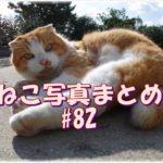 【ねこ 画像】ねこ写真まとめ Vol 82 「猫島」という観光地。猫と遊んだり、写真を撮ったり、気軽に行けていいんだけど、観光地化されてない普通の島にもたいてい猫はいる。