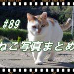 【ねこ 画像】ねこ写真まとめ Vol 89 県をまたいでの移動は6月19日に解禁? いつになれば猫の撮影に行けるのかな。