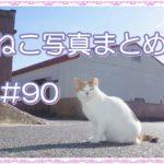【ねこ 画像】ねこ写真まとめ Vol 90 これは、びっくり。ふつうに撮った風景写真。意外な場所にねこが偶然写っていた。