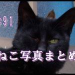 【ねこ 画像】ねこ写真まとめ Vol 91 黒猫に耳が3つあるぞ! 三番目の耳はにゃんだっ? 黒猫の後ろに隠れていたのは…