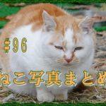 【ねこ 画像】ねこ写真まとめ Vol 96 「チャップリン」のような猫。しかめっ面の猫。猫を撮るための次のカメラに必要な機能はバリアングルモニターとタッチシャッター