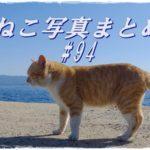 【ねこ 画像】ねこ写真まとめ Vol 94 海をバックに猫を撮りたい。堤防の上で波の音に耳を傾ける茶トラ。今日も港のパトロールをするシロクロ猫。