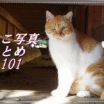 【ねこ 画像】ねこ写真まとめ Vol 101 太陽を避けて日陰だけを移動するキジトラ。「ジロッ」とにらんで歩き去るハチワレ。玉のように丸い三毛猫。縁の下の三毛猫と目が合った。