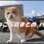 【ねこ 画像】ねこ写真まとめ Vol 98 不安定な場所でストレッチするキジトラ。カメラをチラ見するサビ猫。道のまん中でグルーミング。ご飯待ちで並ぶ猫たち。