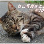 【ねこ 画像】ねこ写真まとめ Vol 103 「ピクッ」として目覚めた猫。道路で熟睡のキジトラ猫。三毛猫のシッポが見えていた。じっと見ている黒猫。切り株に首をすりすり三毛猫。