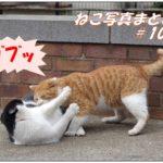 【ねこ 画像】ねこ写真まとめ Vol 102 段を下りて近づいてくる猫。ひょっこり顔を出したハチワレ猫。いきなり脇腹をカブッ。哲学者のような顔の猫。黄色い目を光らせる黒猫。