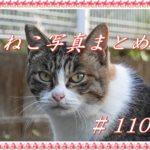 【ねこ 画像】ねこ写真まとめ Vol 110 ずんずん近づいてくる三毛猫。よそ見してても溝に落ちない猫。さりげなくキメ顔の猫。魚をくわえて走り去るキジトラ。