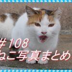 【ねこ 画像】ねこ写真まとめ Vol 108 ダラダラ過ごす白黒猫。寝顔がかわいいキジトラ猫。近くに来て「にゃ~」と鳴く三毛猫。ゆるい生活をおくる猫たち。