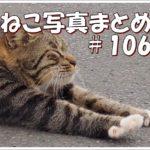 【ねこ 画像】ねこ写真まとめ Vol 106 模様が違う二匹の三毛猫。直立して待っている茶トラ猫。一瞬、目を大きく開いた白黒猫。クールに座っているキジトラ猫。