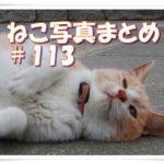 【ねこ 画像】ねこ写真まとめ Vol 113 物陰に隠れて見ている三毛猫。二匹のハチワレ猫の仲良しツーショット。落ち葉が気になる黒猫。胴がハンパなく太い三毛猫。