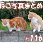 【ねこ 画像】ねこ写真まとめ Vol 116 にらめっこする猫。首をかしげるサビ猫。猫背のキジトラ。ケーブルにシッポを巻きつける猫。慎重に飛び降りる茶トラ。