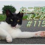 【ねこ 画像】ねこ写真まとめ Vol 115 道のまん中に座っている茶トラ。何かを訴えかけるような目の黒猫。すぐ近くをすり抜けようとする三毛猫。逃げるか逃げないか考え中のハチワレ猫。